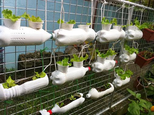 horta organica domestica