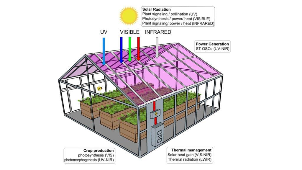 As plantas podem crescer bem em estufas com células solares transparentes embutidas.