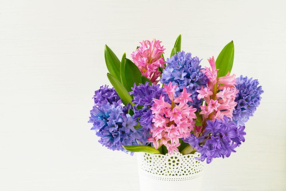 Flores de jacinto