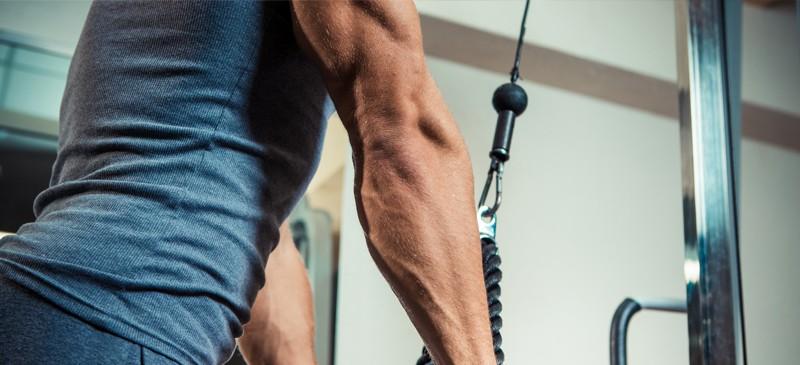 Treino de tríceps - Dr. Axe